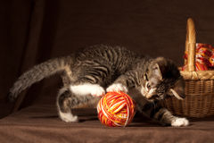 liten kattunge Arkivbild