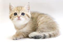Liten kattunge. arkivbild