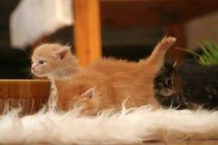 liten kattunge royaltyfri foto