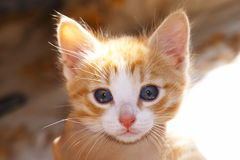 liten kattunge arkivfoton