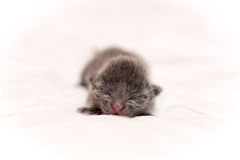 liten kattunge Arkivfoto