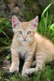 liten kattunge fotografering för bildbyråer