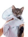 Liten kattunge efter en dusch i flickans händer på vit backgr arkivfoton
