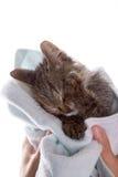 Liten kattunge efter en dusch i flickans händer på vit backgr arkivbild