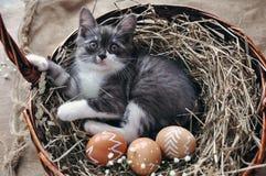 Liten kattunge för gulliga grå färger i en vide- korg och påskägg av naturlig röd färg med den grafiska modellen av vit målarfärg arkivfoton
