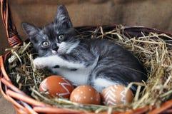 Liten kattunge för gulliga grå färger i en vide- korg och påskägg av naturlig röd färg med den grafiska modellen av vit målarfärg royaltyfri bild