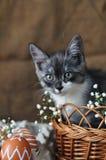 Liten kattunge för gulliga grå färger i en vide- korg och påskägg av naturlig röd färg med en grafisk modell av vit målarfärg i a arkivfoto