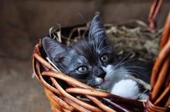 Liten kattunge för gulliga grå färger i en vide- korg på retro säckvävbakgrund fotografering för bildbyråer