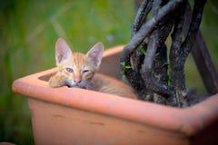 liten kattunge i blomkruka Arkivfoton
