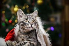 Liten kattunge i en Santa Claus hatt Arkivfoto
