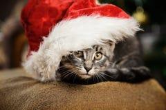 Liten kattunge i en Santa Claus hatt Royaltyfri Fotografi