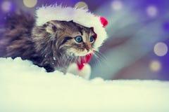 Liten kattunge i en Santa Claus hatt arkivbilder