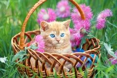 Liten kattunge i korgen Arkivbild