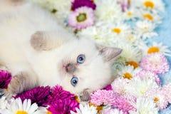 Liten kattunge med blommor Arkivfoto