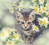 Liten kattunge med blommor fotografering för bildbyråer