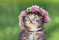 Liten kattunge med en chaplet av växt av släktet Trifolium Arkivbilder
