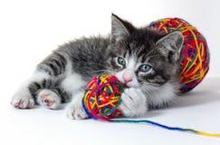 Liten kattunge med ett garnnystan Royaltyfria Bilder