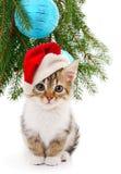 Liten kattunge med julpynt royaltyfria bilder