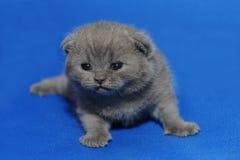 Liten kattunge med nyligen öppnade ögon Royaltyfria Bilder