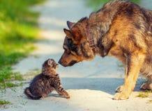 Liten kattunge och stor hund fotografering för bildbyråer