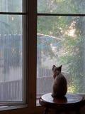 Liten kattunge och stort fönster Royaltyfri Fotografi