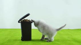 Liten kattunge som äter från leksaken för avskrädefack arkivfilmer