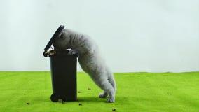 Liten kattunge som äter från leksaken för avskrädefack stock video