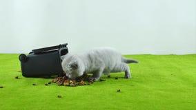 Liten kattunge som äter från leksaken för avskrädefack lager videofilmer