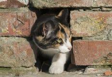 liten kattunge som kikar fearfully ut ur ett hål i tegelstenhuset royaltyfri foto