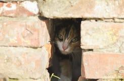 liten kattunge som kikar fearfully ut ur ett hål i tegelstenhuset royaltyfri bild