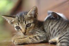 Liten kattunge som ligger på golvet Arkivfoto