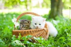 Liten kattunge som är utomhus- Royaltyfria Bilder