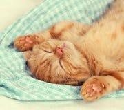 Liten kattunge som sover på baksidan fotografering för bildbyråer