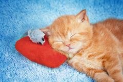 Liten kattunge som sover på kudden med leksakmusen Royaltyfria Bilder
