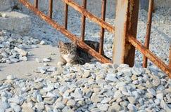 Liten kattunge under staketet Royaltyfria Foton