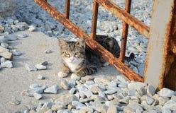 Liten kattunge under staketet Fotografering för Bildbyråer