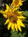 Liten kopia av solen Arkivfoto