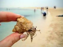 Liten krabba i hand på strandbakgrund Royaltyfri Foto