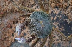 Liten krabba i sanden Royaltyfri Foto