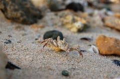 Liten krabba med jordluckrare Arkivfoto