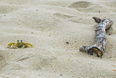 Liten krabba på stranden Royaltyfri Fotografi