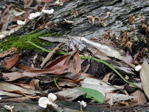 Liten krypning för grön orm Royaltyfri Fotografi