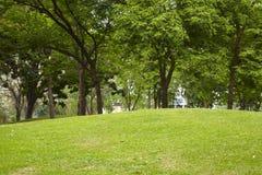 Liten kulle och många träd Arkivbilder