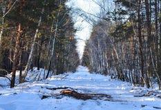 Liten landsväg för vinter till och med snöig fält och skogar med solsken på träd arkivfoto