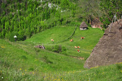 Liten lantgård i bergen Royaltyfria Foton