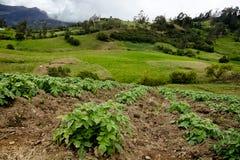 Liten lantgård på Colombia Royaltyfri Fotografi