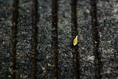 liten leaf Arkivbilder