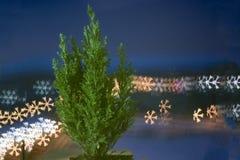 Liten levande julgran i en kruka på bokehbakgrund bokehsnöflinga royaltyfri fotografi