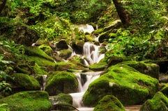 Liten liten vik i en mossig skog Arkivfoto