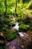 Liten liten vik i en mossig skog Arkivbild